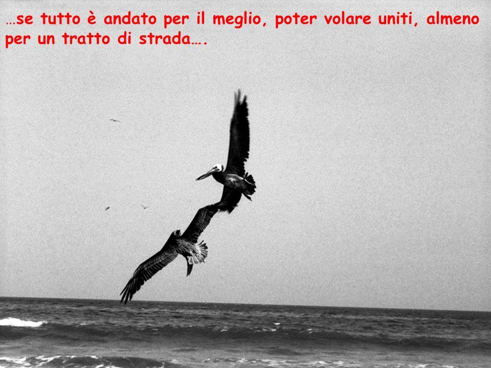 …se tutto è andato per il meglio, poter volare uniti, almeno per un tratto di strada….