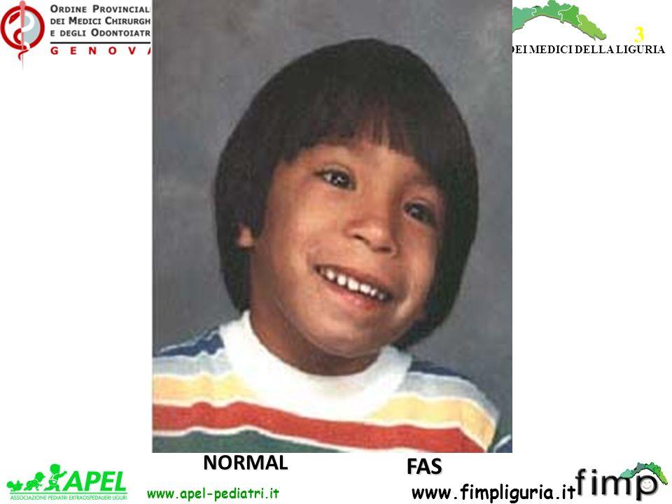 FED. REG. ORDINI DEI MEDICI DELLA LIGURIA www.apel-pediatri.it www.fimpliguria.it FAS NORMAL 3
