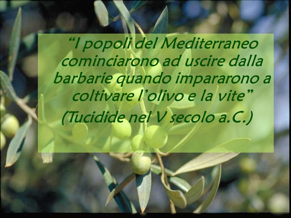I popoli del Mediterraneo cominciarono ad uscire dalla barbarie quando impararono a coltivare lolivo e la vite ( Tucidide nel V secolo a.C.) I popoli