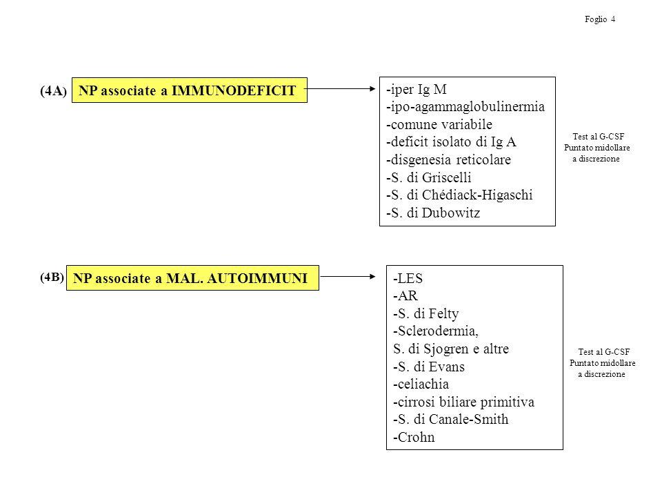 NP associate a IMMUNODEFICIT NP associate a MAL. AUTOIMMUNI -iper Ig M -ipo-agammaglobulinermia -comune variabile -deficit isolato di Ig A -disgenesia
