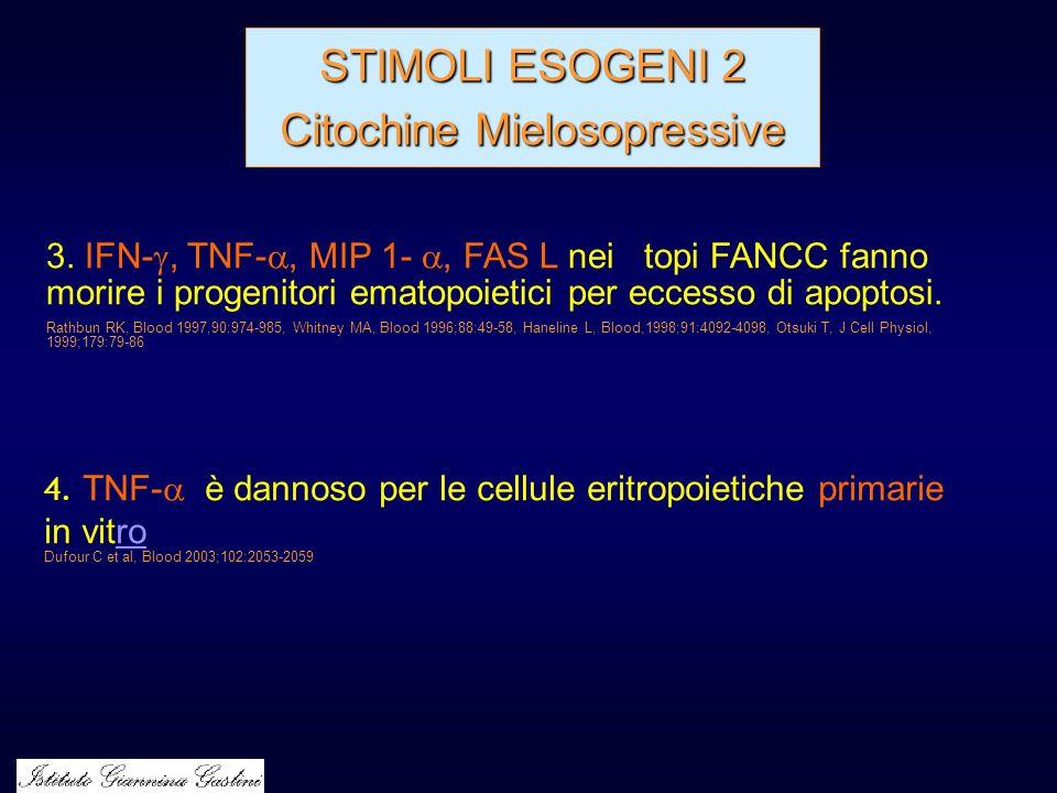 STIMOLI ESOGENI 2 Citochine Mielosopressive 4. TNF- è dannoso per le cellule eritropoietiche primarie in vitroro Dufour C et al, Blood 2003;102:2053-2
