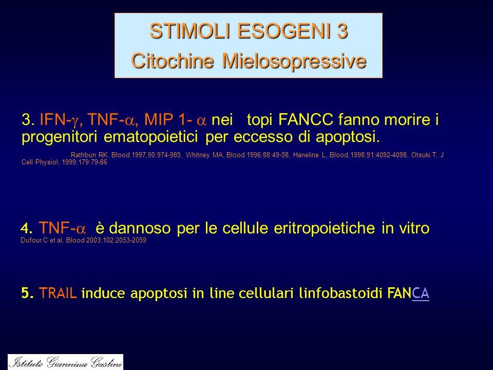 STIMOLI ESOGENI 3 Citochine Mielosopressive 4. TNF- è dannoso per le cellule eritropoietiche in vitro Dufour C et al, Blood 2003;102:2053-2059 3. IFN-