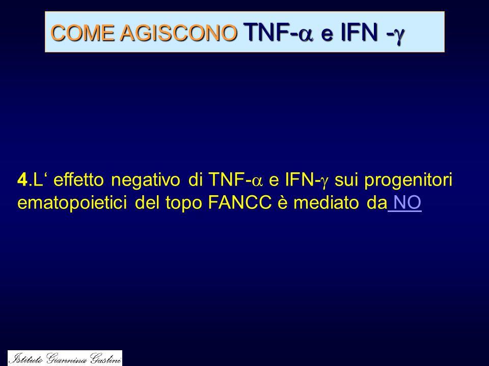 COME AGISCONO TNF- e IFN - COME AGISCONO TNF- e IFN - 4.L effetto negativo di TNF- e IFN- sui progenitori ematopoietici del topo FANCC è mediato da NO