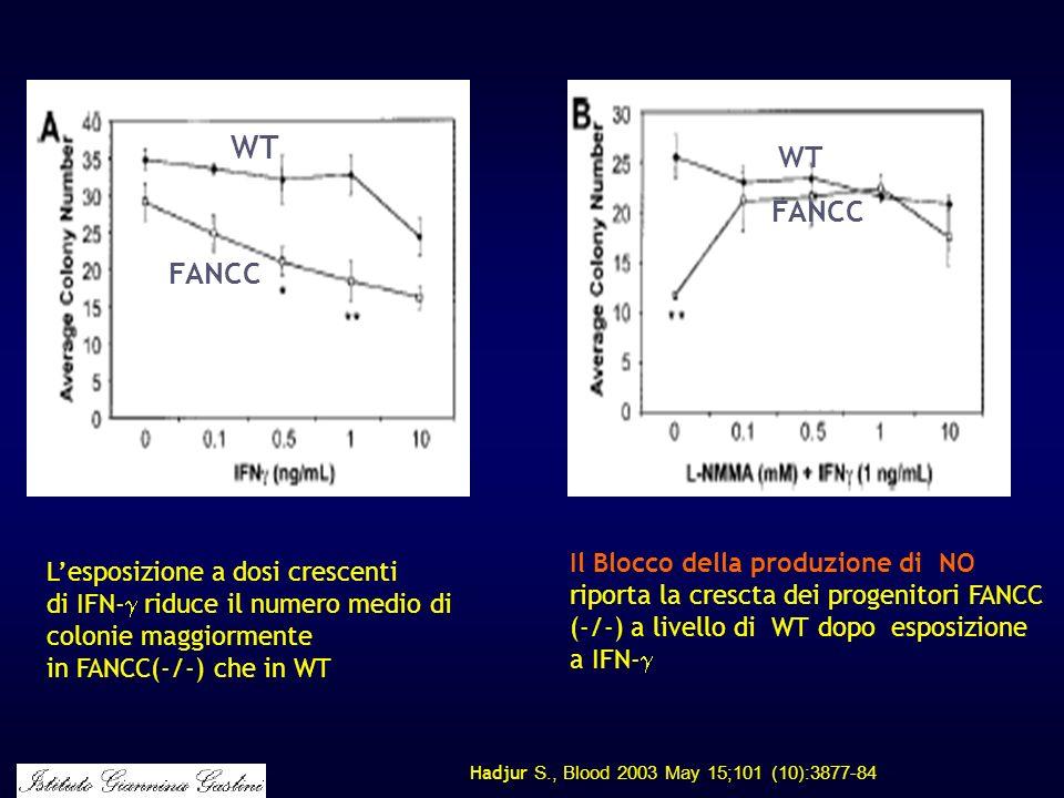 Hadjur S., Blood 2003 May 15;101 (10):3877-84 Lesposizione a dosi crescenti di IFN- riduce il numero medio di colonie maggiormente in FANCC(-/-) che i