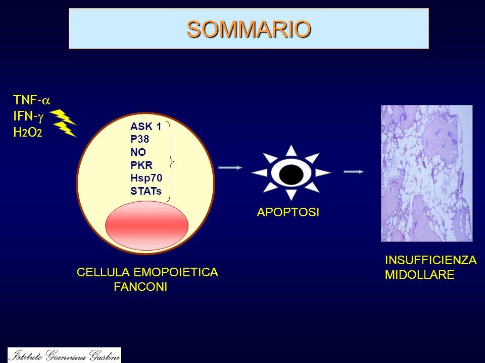 SOMMARIO INSUFFICIENZAMIDOLLARE TNF- IFN- H 2 O 2 APOPTOSI ASK 1 P38 NO PKR Hsp70 STATs CELLULA EMOPOIETICA FANCONI
