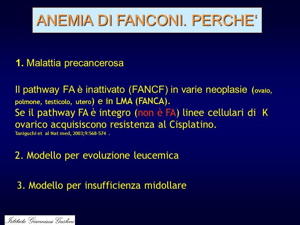 ANEMIA DI FANCONI. PERCHE Il pathway FA è inattivato (FANCF) in varie neoplasie ( ovaio, polmone, testicolo, utero ) e in LMA (FANCA). Se il pathway F