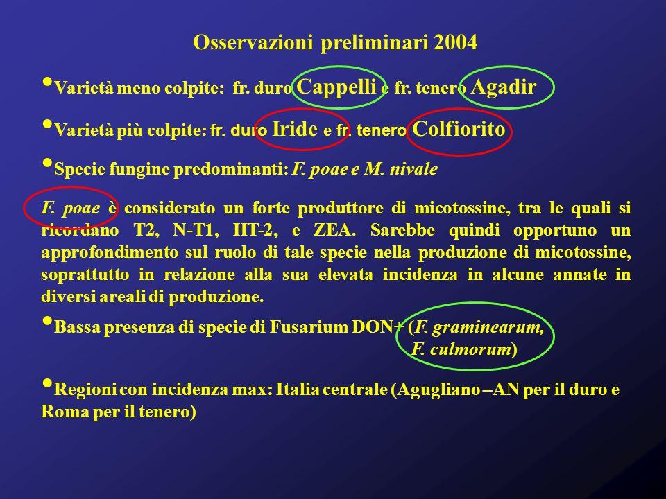 Osservazioni preliminari 2004 Varietà meno colpite: fr. duro Cappelli e fr. tenero Agadir Varietà più colpite: fr. duro Iride e fr. tenero Colfiorito