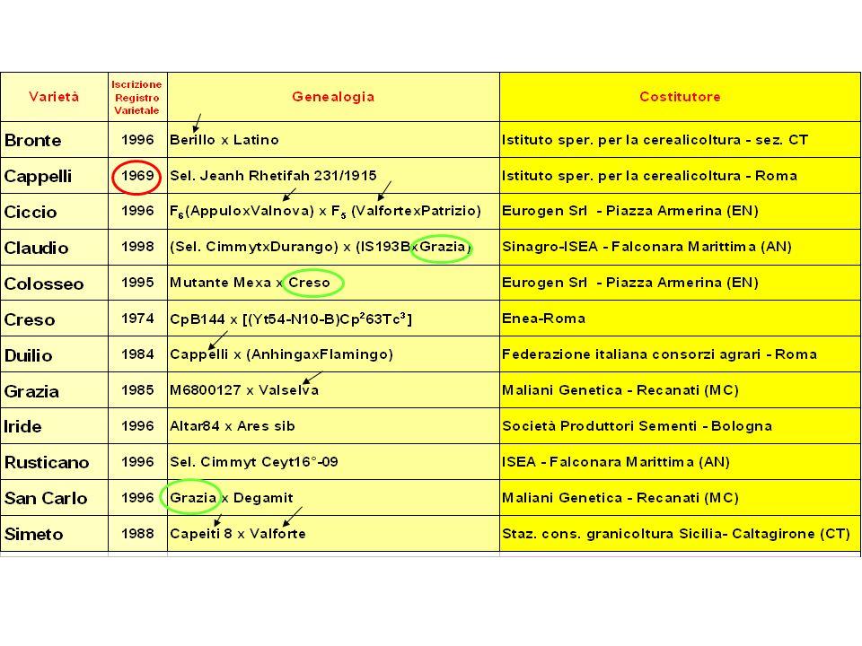 Caratterizzazione qualitativa delle cultivar in prova nel 2003-04 valori medi di 6 località SFARINATO INTEGRALE Caratterizzazione qualitativa delle cultivar in prova nel 2003-04 valori medi di 6 località SFARINATO INTEGRALE Caratterizzazione qualitativa delle cultivar in prova nel 2003-04 valori medi di 6 località SFARINATO INTEGRALE