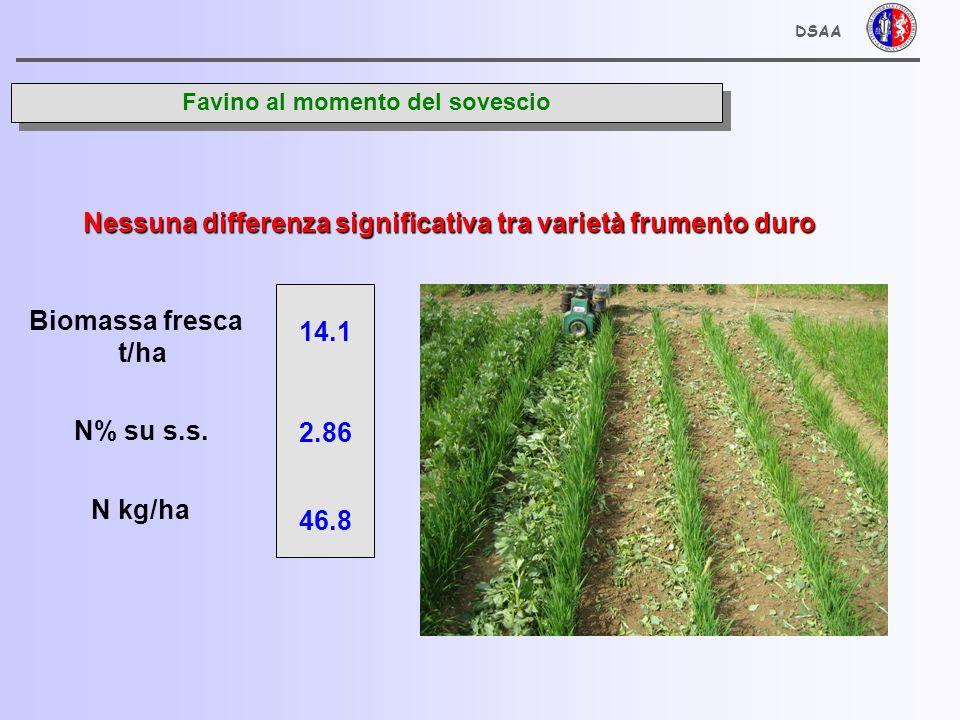 DSAA Frumento duro - foglie bandiera - 40 giorni dopo sovescio Varietà CAPPELLI CRESO DUILIO 2.91 n.s.