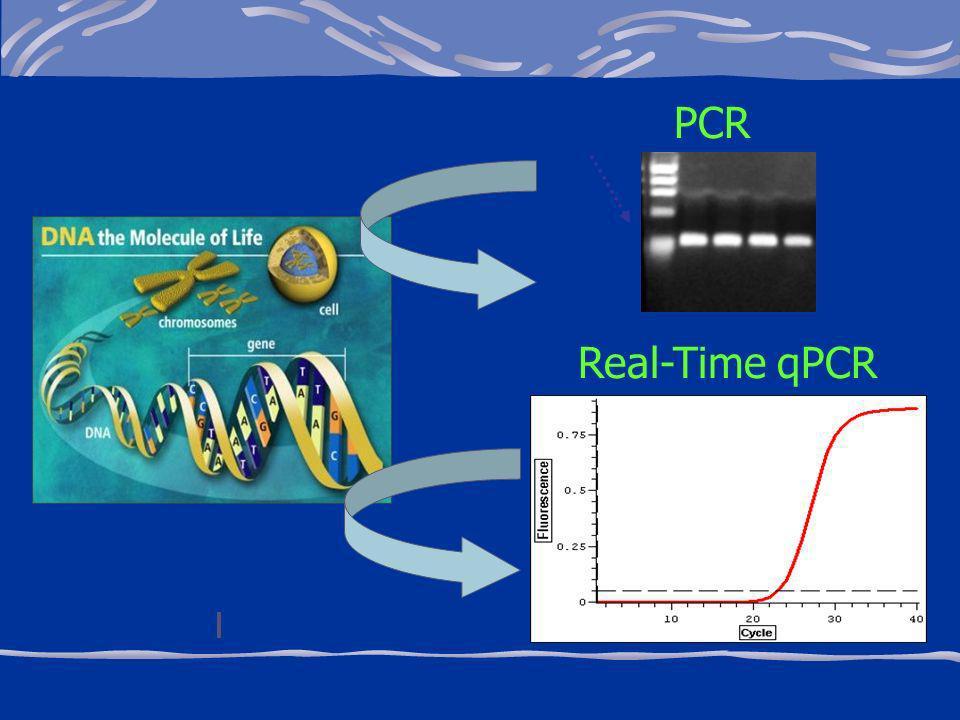 PCR Real-Time qPCR