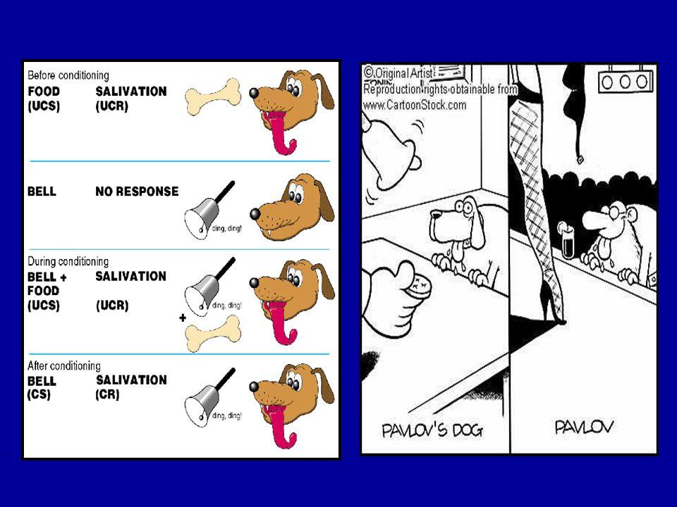 Controllo (PC) Memoria (amigdala) Spinta (OFC) Reward Salienza (Nacc) STOP controllo Memoria Spinta Reward Salienza GO Non dipendente Dipendente