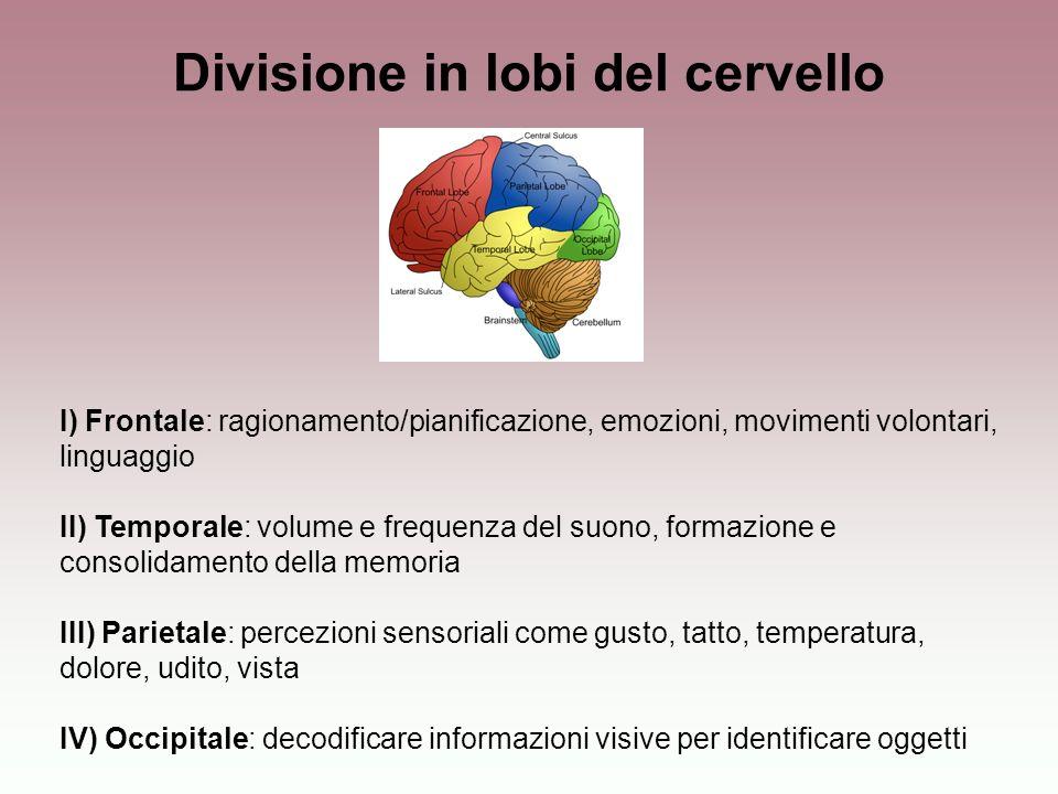 Divisione in lobi del cervello I) Frontale: ragionamento/pianificazione, emozioni, movimenti volontari, linguaggio II) Temporale: volume e frequenza d