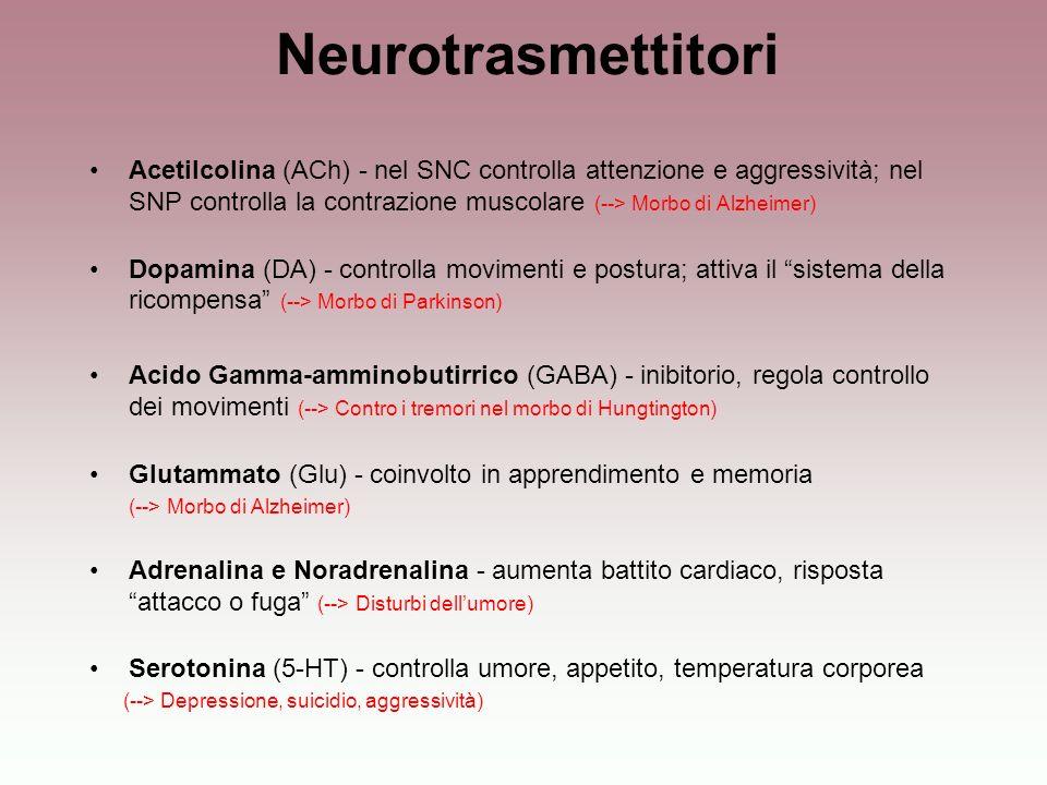 Acetilcolina (ACh) - nel SNC controlla attenzione e aggressività; nel SNP controlla la contrazione muscolare (--> Morbo di Alzheimer) Dopamina (DA) -