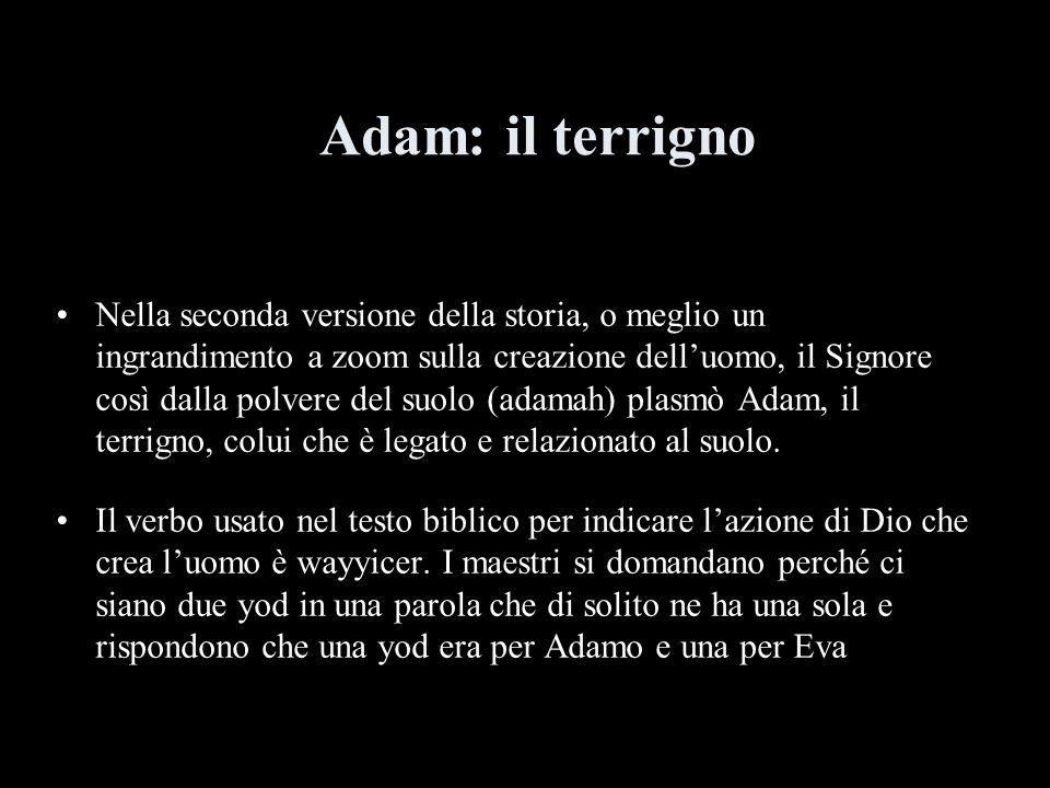Adam: il terrigno Nella seconda versione della storia, o meglio un ingrandimento a zoom sulla creazione delluomo, il Signore così dalla polvere del suolo (adamah) plasmò Adam, il terrigno, colui che è legato e relazionato al suolo.