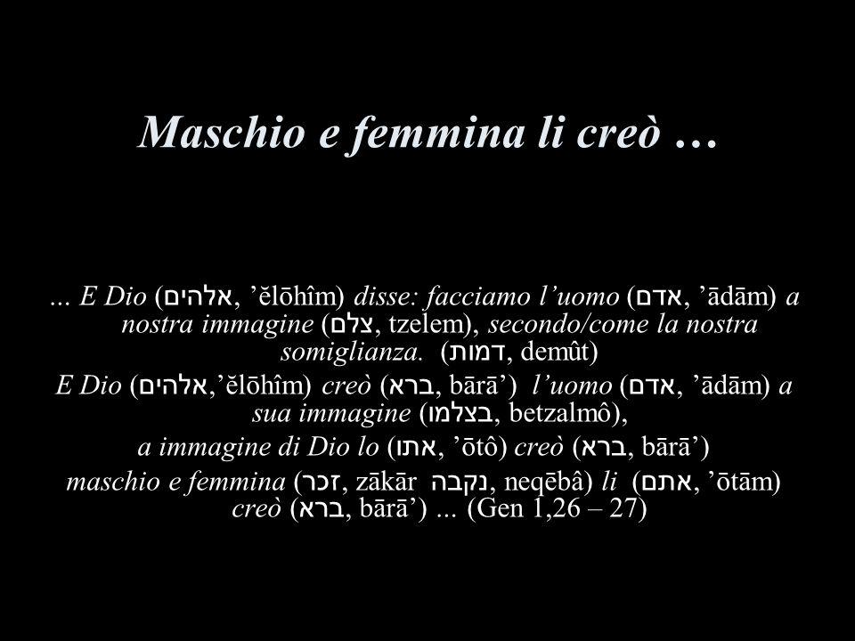 Maschio e femmina li creò … … E Dio ( אלהים, ĕlōhîm) disse: facciamo luomo ( אדם, ādām) a nostra immagine ( צלם, tzelem), secondo/come la nostra somig