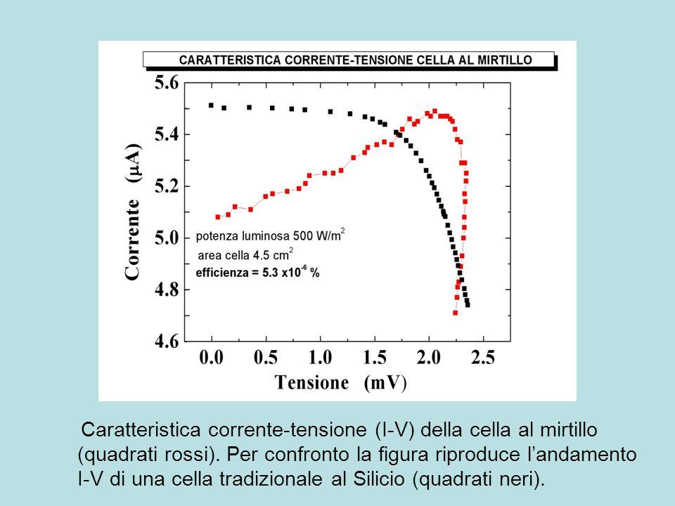 Caratteristica corrente-tensione (I-V) della cella al mirtillo (quadrati rossi).