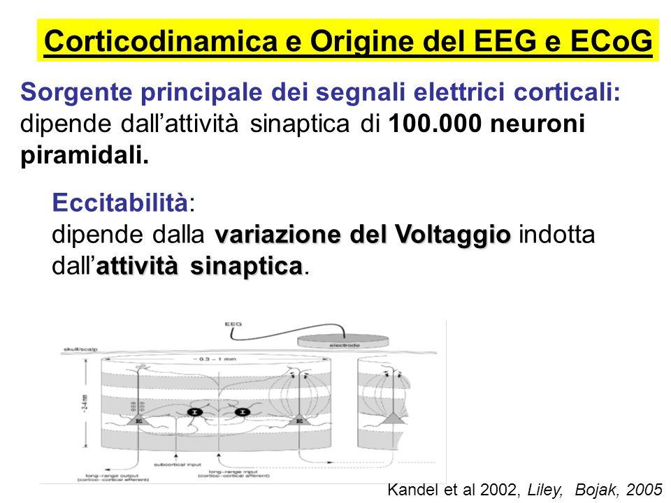 Corticodinamica e Origine del EEG e ECoG Eccitabilità: variazione del Voltaggio attività sinaptica dipende dalla variazione del Voltaggio indotta dall