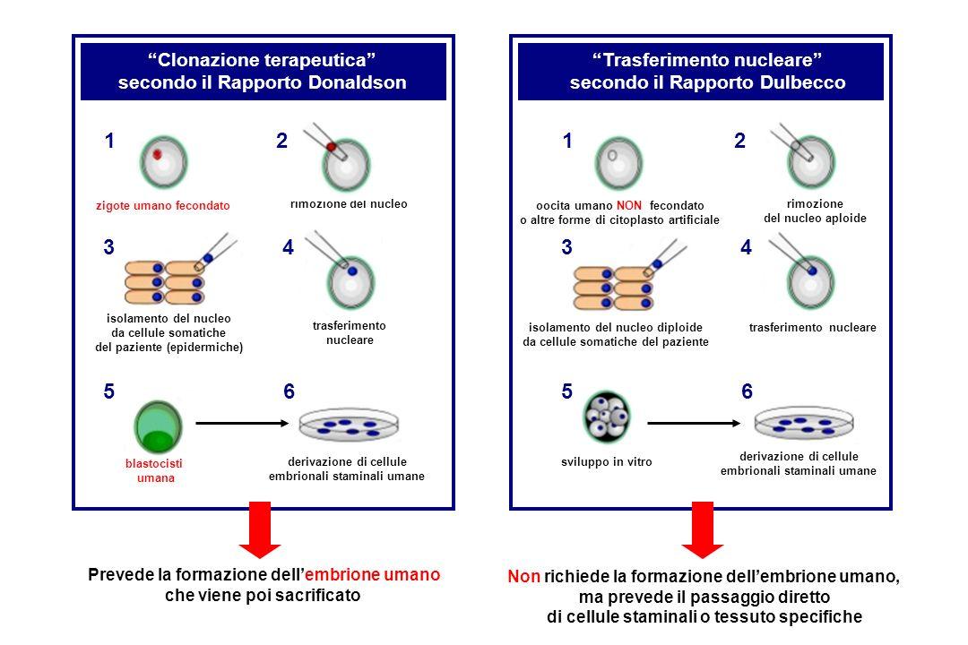 PRODUZIONE DI CELLULE STAMINALI TOTIPOTENTI Senza formazione dellembrione (secondo Dulbecco) Attraverso la formazione dellembrione (secondo Donaldson) Oocita fecondato Morula Blastula Citoplasto Trasferimento del nucleo somatico Cellule staminali