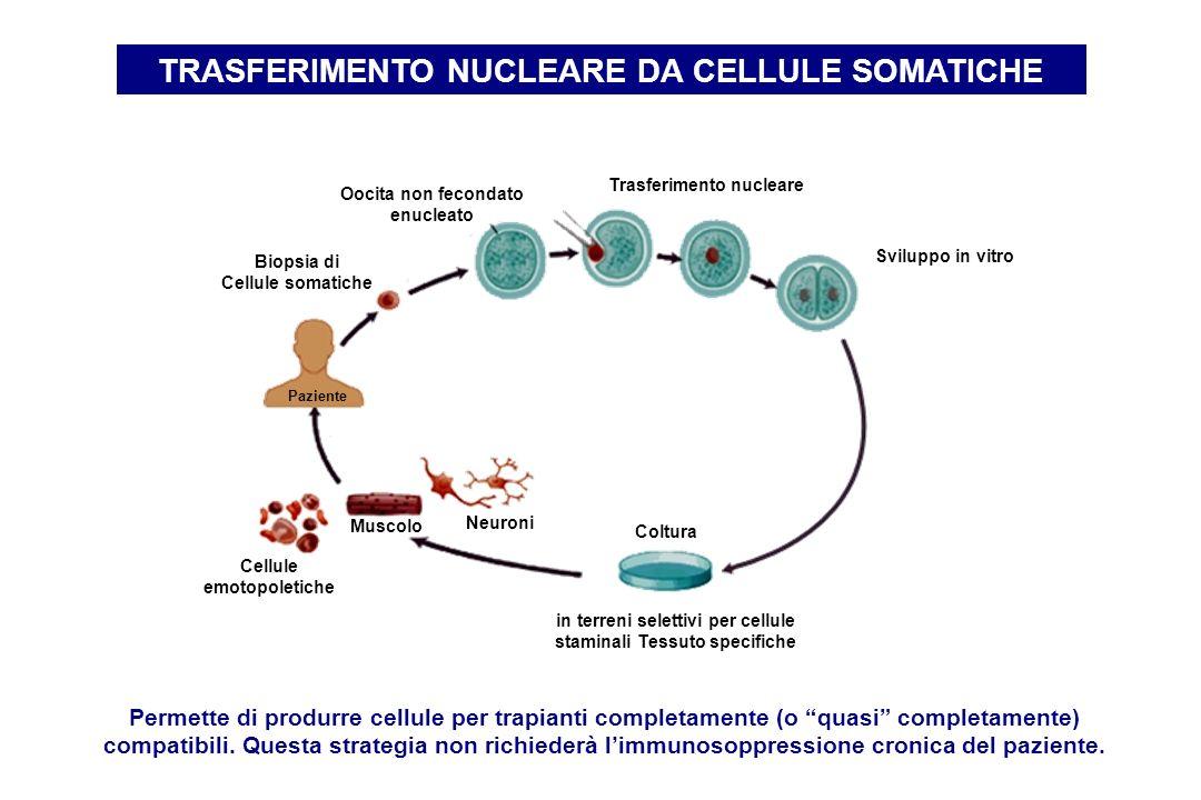 Paziente Biopsia di Cellule somatiche Oocita non fecondato enucleato Trasferimento nucleare Sviluppo in vitro Coltura in terreni selettivi per cellule