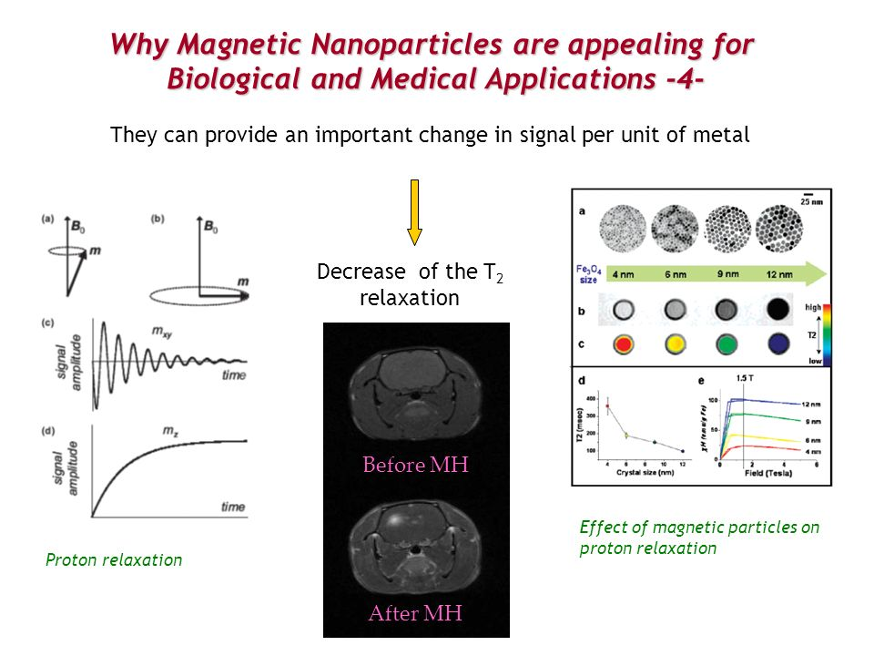 Why Magnetic Nanoparticles are appealing for Biological and Medical Applications -4- They can provide an important change in signal per unit of metal