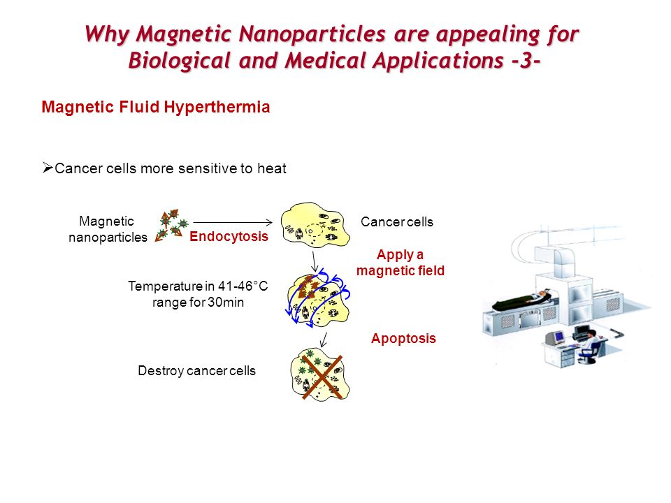 Why Magnetic Nanoparticles are appealing for Biological and Medical Applications -3- Magnetic Fluid Hyperthermia Cancer cells more sensitive to heat A