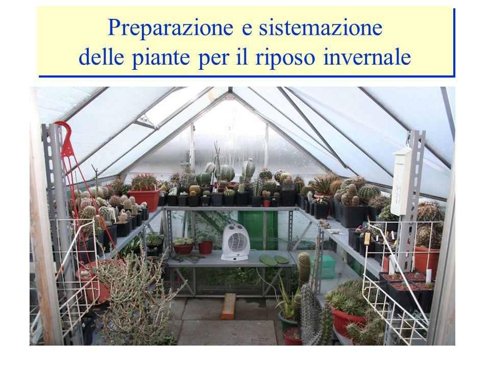 Preparazione e sistemazione delle piante per il riposo invernale