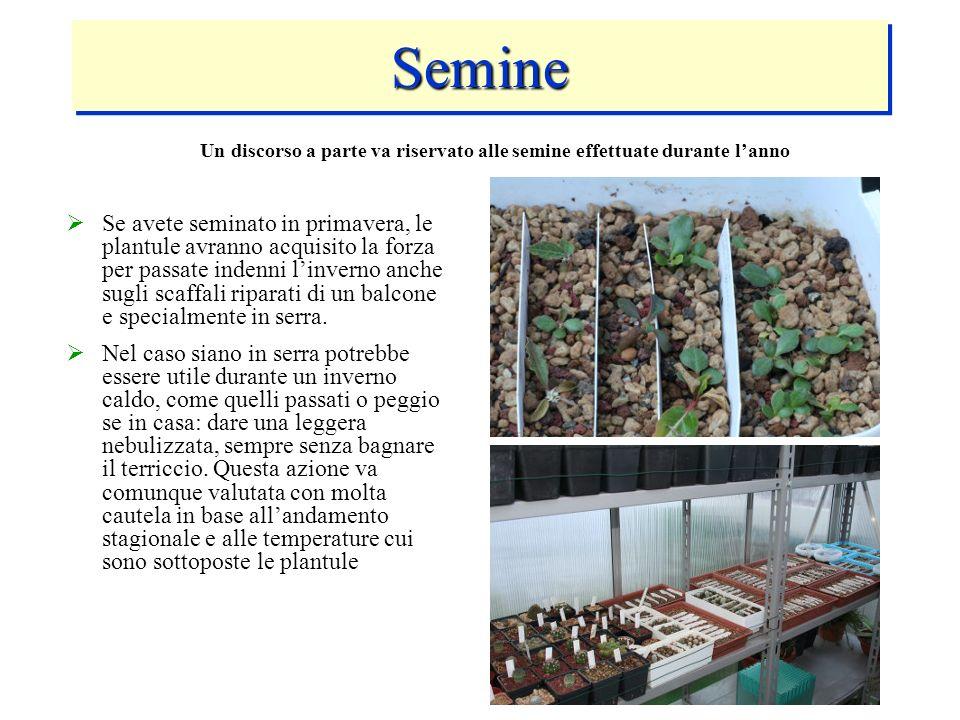 SemineSemine Se avete seminato in primavera, le plantule avranno acquisito la forza per passate indenni linverno anche sugli scaffali riparati di un b