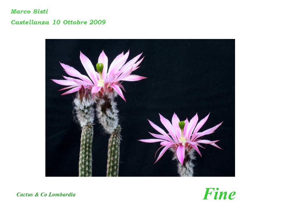 Fine Marco Sisti Castellanza 10 Ottobre 2009 Cactus & Co Lombardia