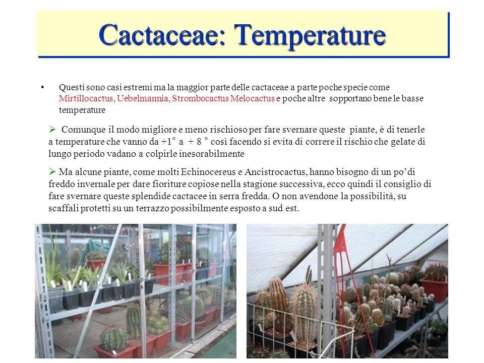 Cactaceae: Temperature Questi sono casi estremi ma la maggior parte delle cactaceae a parte poche specie come Mirtillocactus, Uebelmannia, Strombocact