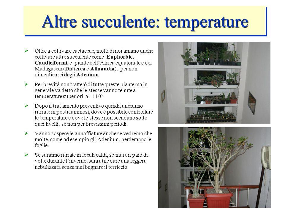 Altre succulente: temperature Oltre a coltivare cactaceae, molti di noi amano anche coltivare altre succulente come Euphorbie, Caudiciformi, e piante