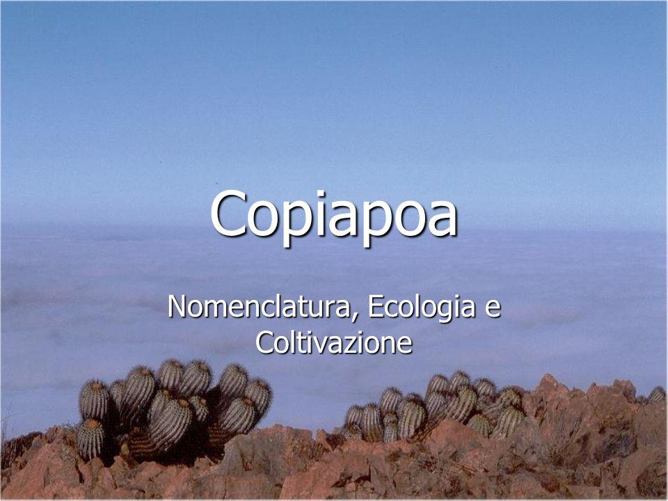 Copiapoa Nomenclatura, Ecologia e Coltivazione