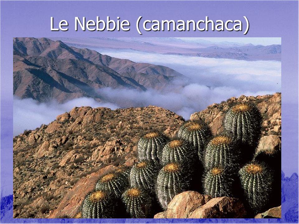 Le Nebbie (camanchaca)