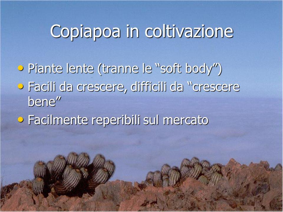 Copiapoa in coltivazione Piante lente (tranne le soft body) Piante lente (tranne le soft body) Facili da crescere, difficili da crescere bene Facili d