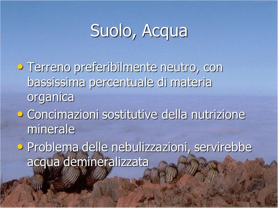 Suolo, Acqua Terreno preferibilmente neutro, con bassissima percentuale di materia organica Terreno preferibilmente neutro, con bassissima percentuale