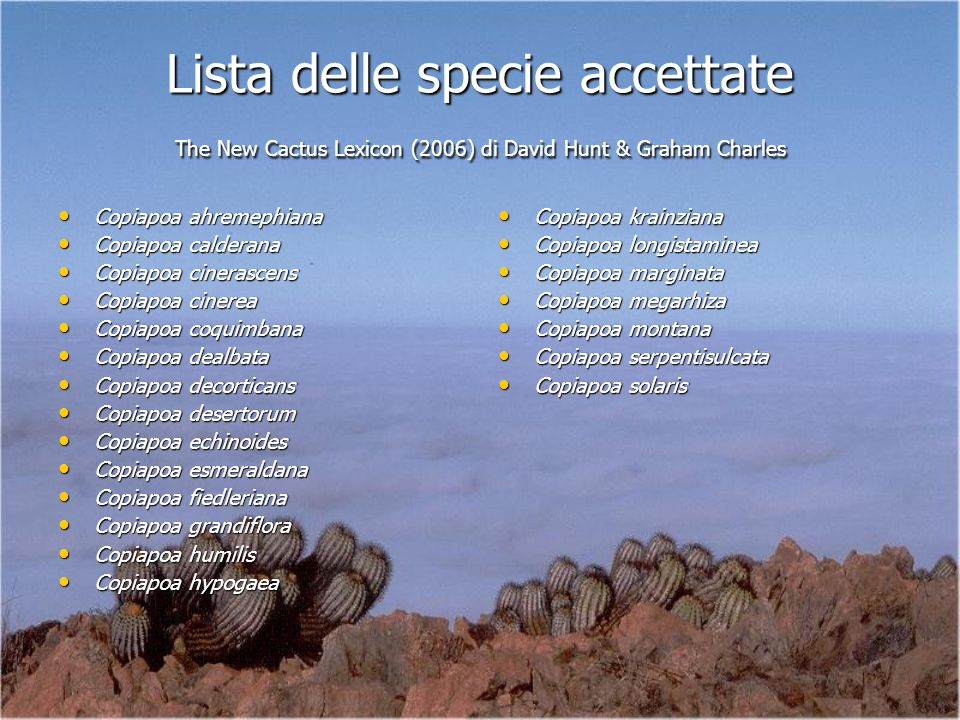 Lista delle specie accettate The New Cactus Lexicon (2006) di David Hunt & Graham Charles Copiapoa ahremephiana Copiapoa ahremephiana Copiapoa caldera