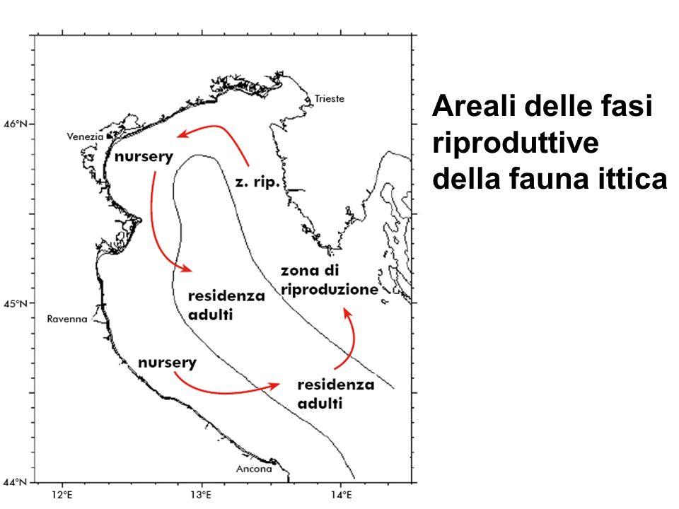 Areali delle fasi riproduttive della fauna ittica