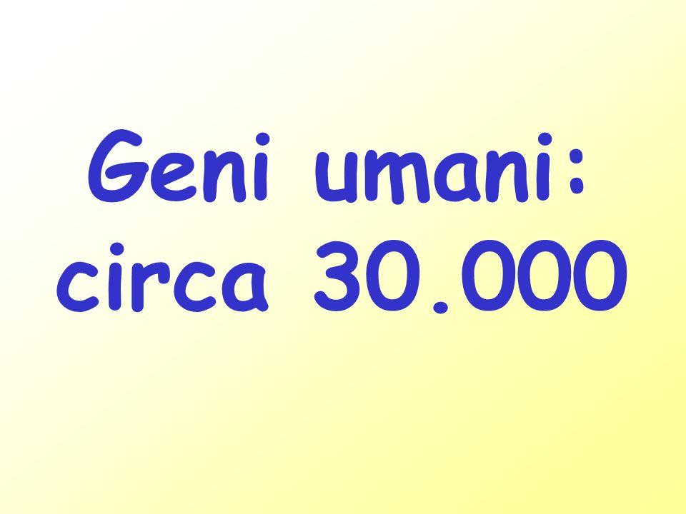 Genoma umano: 3.300.000.000 pb