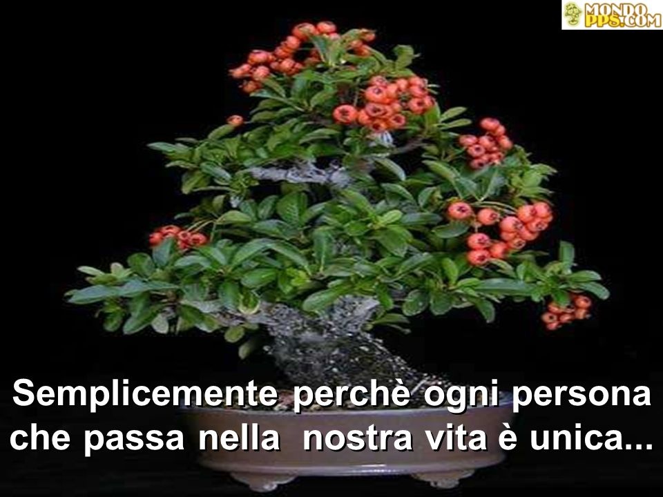 Per questo... Ti auguro, Foglia del mio albero... PACE, AMORE, SALUTE, FORTUNA E PROSPERITÀ... OGGI E SEMPRE!!!