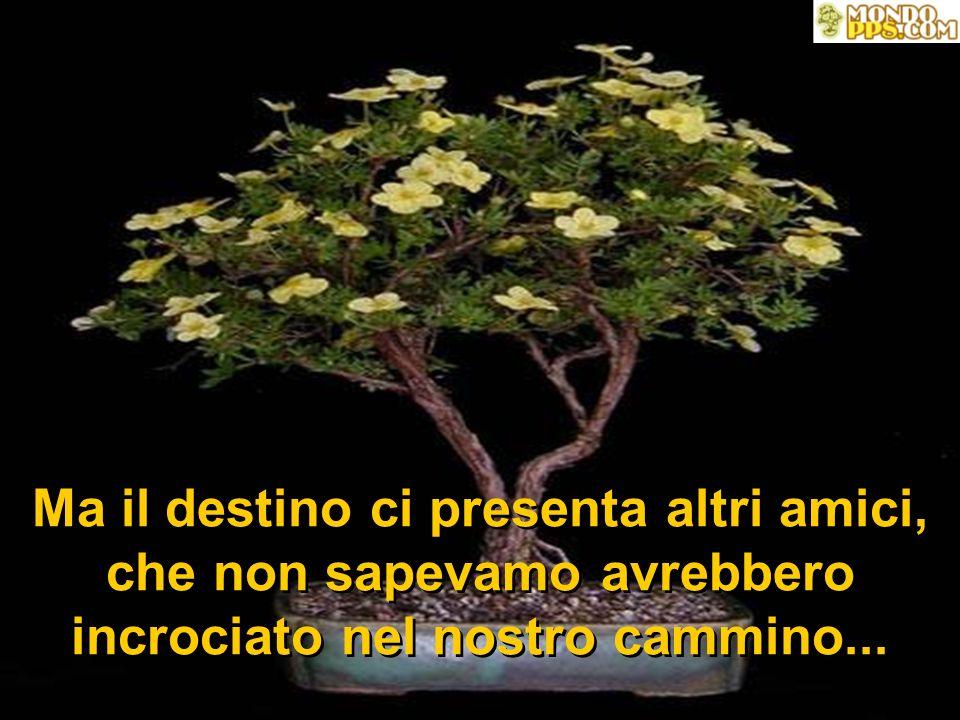 Passiamo allora a conoscere tutta la famiglia delle foglie che rispettiamo e quelle cui vogliamo bene...