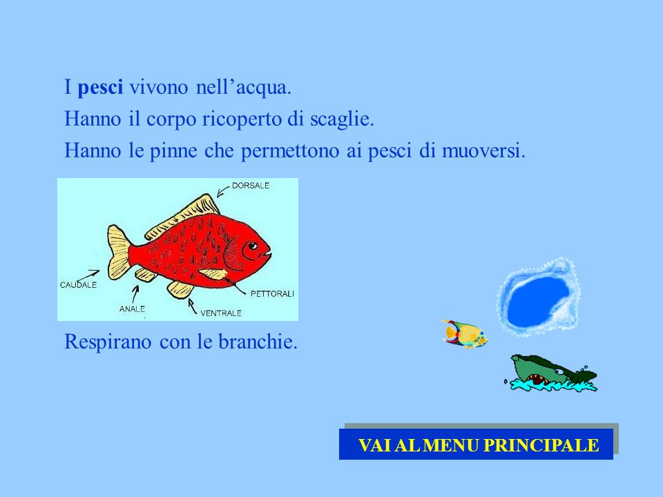 I pesci vivono nellacqua. Hanno il corpo ricoperto di scaglie. Hanno le pinne che permettono ai pesci di muoversi. Respirano con le branchie. VAI AL M