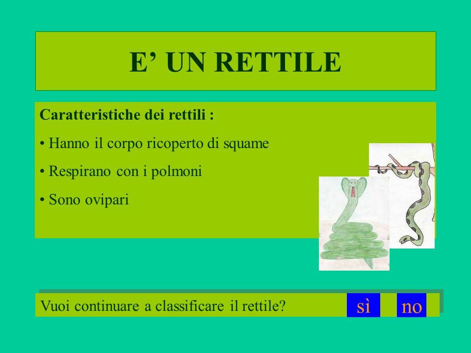 Caratteristiche dei rettili : Hanno il corpo ricoperto di squame Respirano con i polmoni Sono ovipari E UN RETTILE Vuoi continuare a classificare il r