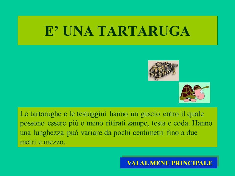 E UNA TARTARUGA Le tartarughe e le testuggini hanno un guscio entro il quale possono essere più o meno ritirati zampe, testa e coda. Hanno una lunghez