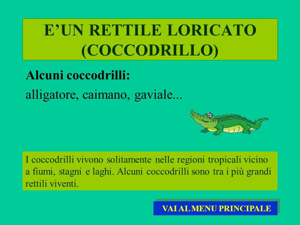 EUN RETTILE LORICATO (COCCODRILLO) I coccodrilli vivono solitamente nelle regioni tropicali vicino a fiumi, stagni e laghi. Alcuni coccodrilli sono tr