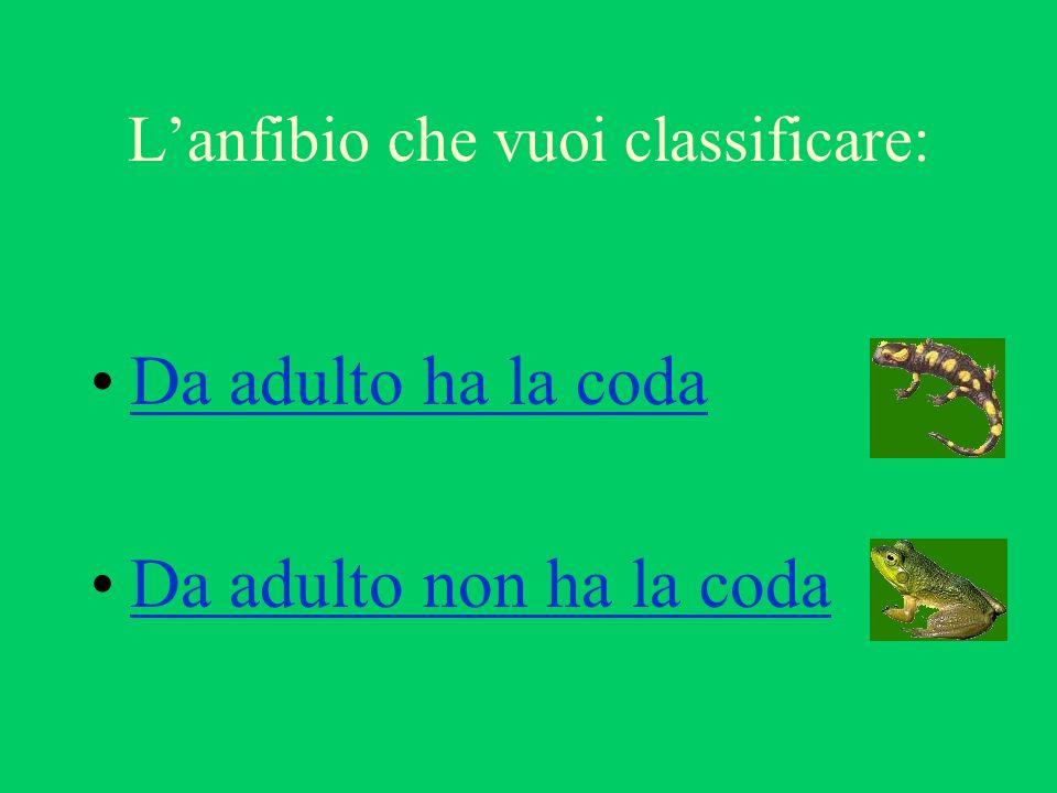 Da adulto ha la coda Da adulto non ha la coda Lanfibio che vuoi classificare: