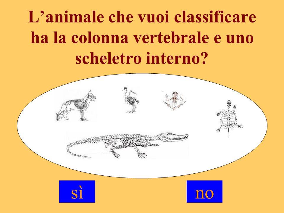 È UN VERTEBRATO Vuoi continuare a classificare il vertebrato.