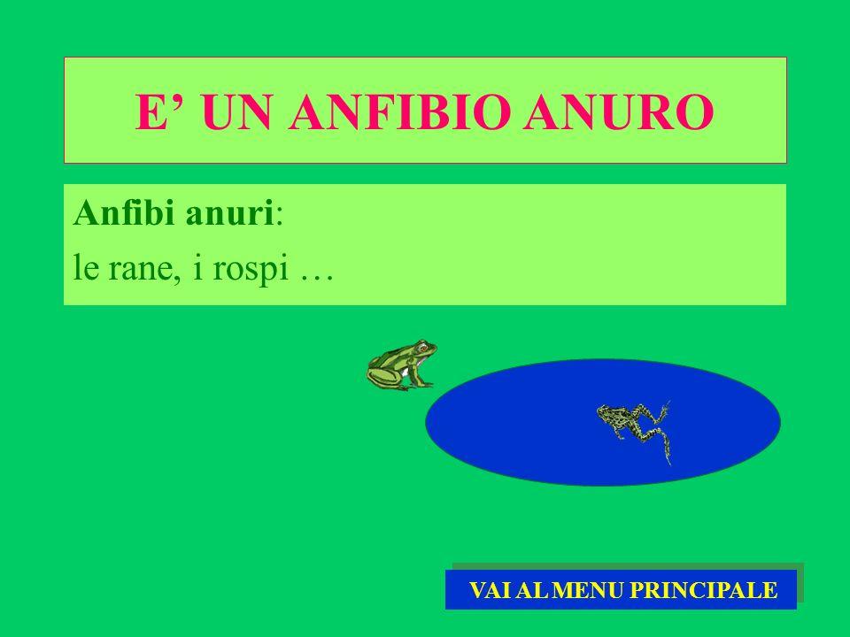 E UN ANFIBIO ANURO Anfibi anuri: le rane, i rospi … VAI AL MENU PRINCIPALE VAI AL MENU PRINCIPALE