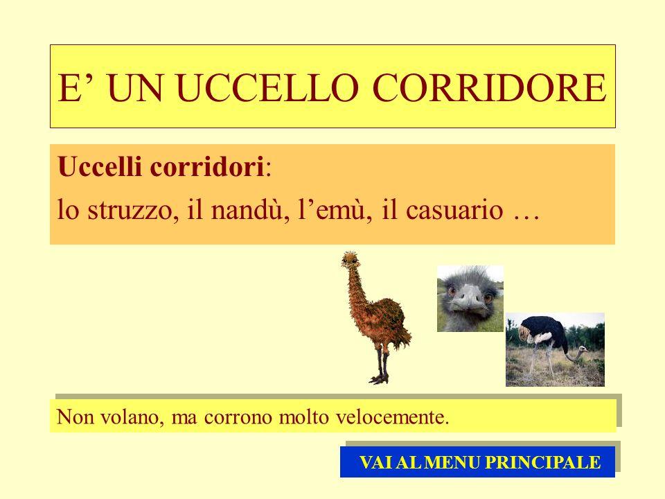 E UN UCCELLO CORRIDORE Uccelli corridori: lo struzzo, il nandù, lemù, il casuario … Non volano, ma corrono molto velocemente. VAI AL MENU PRINCIPALE V