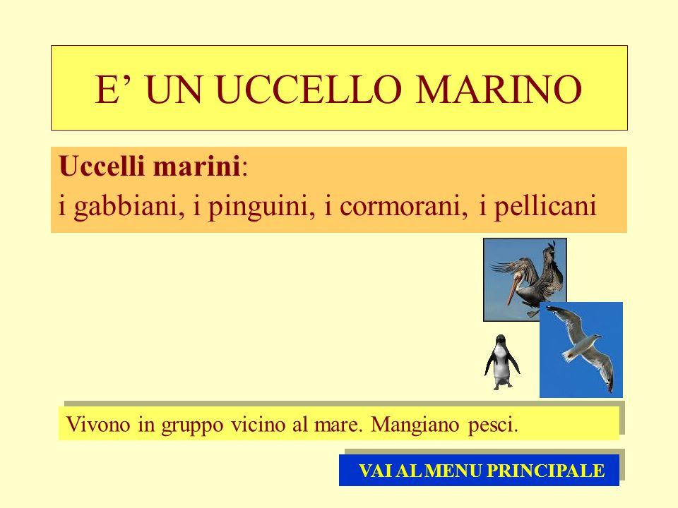 E UN UCCELLO MARINO Uccelli marini: i gabbiani, i pinguini, i cormorani, i pellicani Vivono in gruppo vicino al mare. Mangiano pesci. VAI AL MENU PRIN