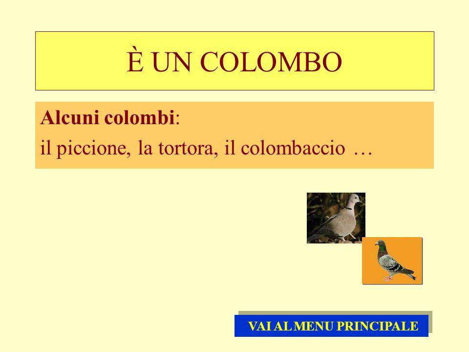 È UN COLOMBO Alcuni colombi: il piccione, la tortora, il colombaccio … VAI AL MENU PRINCIPALE VAI AL MENU PRINCIPALE