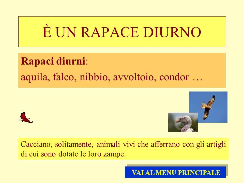 È UN RAPACE DIURNO Rapaci diurni: aquila, falco, nibbio, avvoltoio, condor … Cacciano, solitamente, animali vivi che afferrano con gli artigli di cui